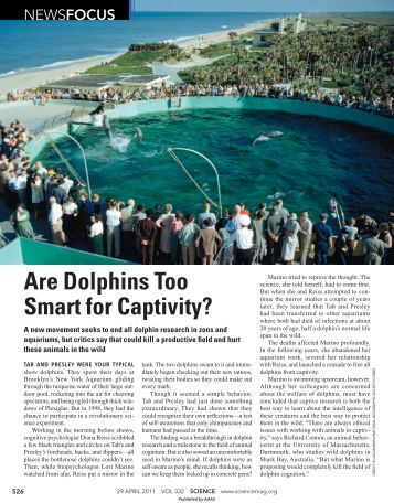 are-dolphins-too-smart-too-captivity