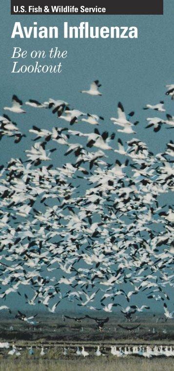Avian Influenza Factsheet