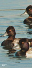 Avian Influenza Factsheet - Page 2
