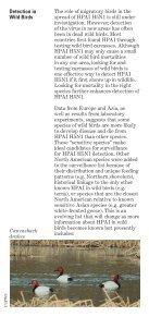 Avian Influenza Factsheet - Page 4