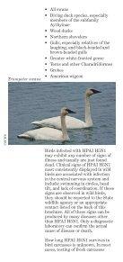 Avian Influenza Factsheet - Page 5