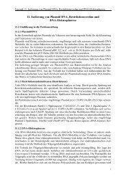 11. Isolierung von Plasmid DNA, Restriktionsverdau und DNA ...