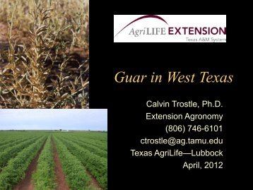 Guar in West Texas - Texas A&M AgriLife Research & Extension ...