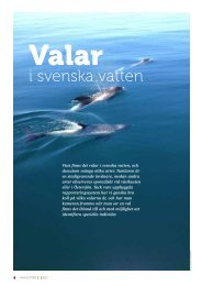 i svenska vatten - Havet.nu