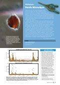 Västerhavet 2013 - Havsmiljöinstitutet - Page 5