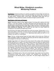 Wheat Midge: Sitodiplosis mosellana Monitoring Protocol