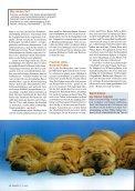 Seit der Mensch Tiere züchtet, leidet die Kreatur unter den ... - VgT - Seite 3