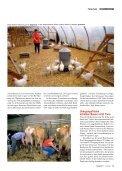 Seit der Mensch Tiere züchtet, leidet die Kreatur unter den ... - VgT - Seite 7