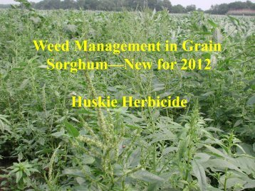Weed Management in Grain Sorghum—New for 2012 Huskie ...