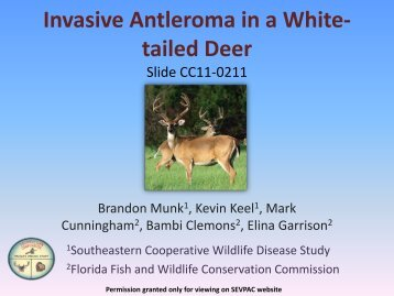 Invasive Antleroma in a White- tailed Deer