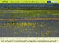 Rastline Cerkniškega jezera - Presihajoče Cerkniško jezero