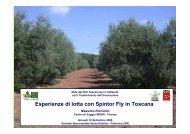 Esperienze di lotta con Spinosad in Toscana - Archivio Rete Poli