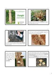 I funghi - Archivio Rete Poli