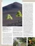 Zwischen Bananen und Vulkanen - 500km zu Fuß auf den ... - Rytz - Seite 3