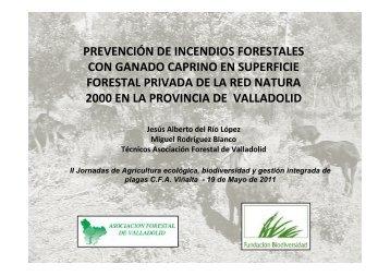 protección contra incendios utilizando rebaños de ganado caprino