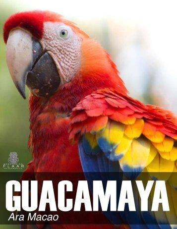 52_scarlet-macaw-guacamaya-Ara-macao-Maya-ethnozoology ...