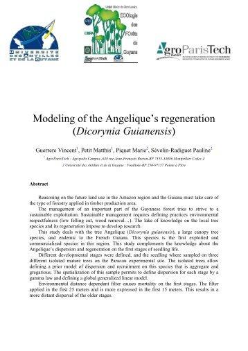 Dicorynia Guianensis - UMR EcoFoG