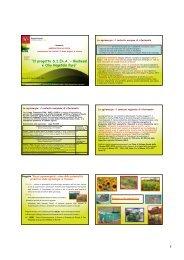 Biodiesel e Olio vegetale - Archivio Rete Poli - Arsia