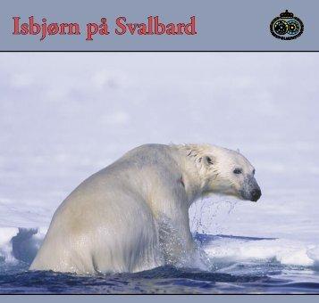 Isbjørn på Svalbard - Sysselmannen