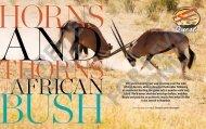 The Jews of Namibia - Halachic Adventures