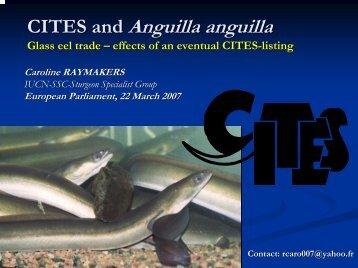 Glass Eel Trade