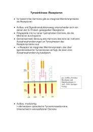 Tyrosinkinase- Rezeptoren