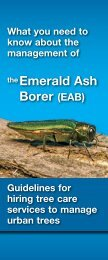 Emerald Ash Borer - City of Toronto