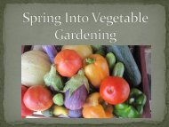Plant selection by month and vegetable varieties for Collin County