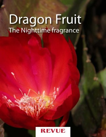 Dragon Fruit, the Nighttime Fragrance. Article for REVUE by ...