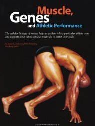 Muscle, Genes and Athletic Performance - LearningMethods
