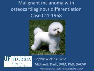 Malignant melanoma with osteocartilaginous differentiation Case ...