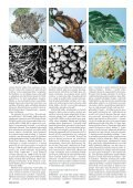 Článek v PDF ke stažení - Živa - Page 2