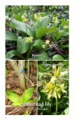 A Guide to Woodland Plants in the Credit River Watershed (1.86 MB) - Page 6