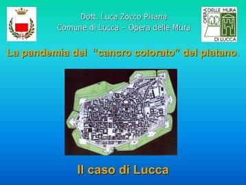 """Il """"cancro colorato"""" del platano in Toscana: esperienze a confronto"""