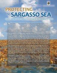 Sargasso Sea Alliance