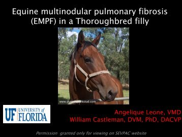 Equine multinodular pulmonary fibrosis (EMPF) in a Thoroughbred filly