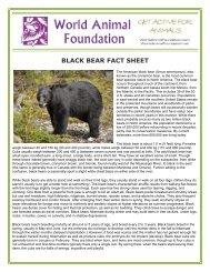 BLACK BEAR FACT SHEET - World Animal Foundation