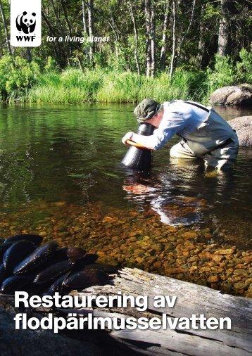 Restaurering av flodpärlmusselvatten - Världsnaturfonden WWF