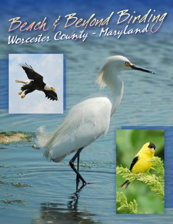 Download our Birds Of Worcester County booklet to use on your ...