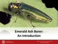 Emerald Ash Borer - New York Invasive Species Information