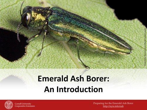 Emerald Ash Borer - New York Invasive Species Information