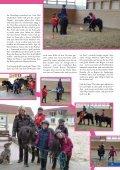 My Little Shettie - Ponys für Kinder - Stallgefluester - Seite 2