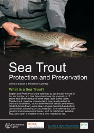 What is a Sea Trout? - Salmon & Trout Association