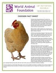 CHICKEN FACT SHEET - World Animal Foundation