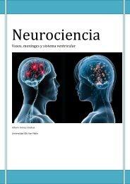 Neurociencia. Vasos, meninges y sistema ... - VeoApuntes.com