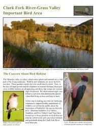 Clark Fork brochure - Montana Audubon
