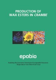 production of wax esters in crambe