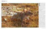 Vergessen Sie alles, was Sie über Ratten wissen. eines tages ...