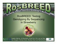 RosBREED: Testing Genotyping By Sequencing in Strawberry