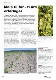 Mais til fôr - ti års erfaringer - Fagbladet Økologisk Landbruk